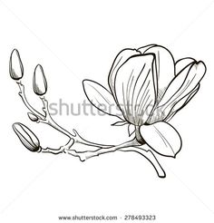 magnolia branch drawing - Google Search