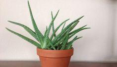 """Astuce """"jardin"""" : 9 Plantes d'Intérieur Qui Nettoient l'Air et Qui Sont Quasi Increvables."""