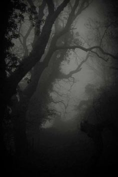 as night fell and the fog rolled into the darkness, she waited. Nature Landscape, Dark Landscape, Darkness Falls, Dark Photography, Dark Night, Misty Night, Dark Places, Dark Beauty, Photomontage