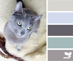 27 Kittenish And Puppyful Color Palettes Is it wrong to base my color schemes off pictures of cats and dogs?