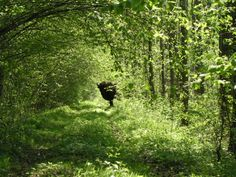 the last of the free bison in Europe live in this enchanting forest, the last primeval forest in the world, Białowieża Forest in Poland. This is what I imagine when I read books about medieval times, robin hood, fairies and princesses :)