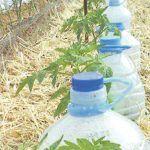 Grădinărit Archives - Page 2 of 18 - Fasingur Spray Bottle, Woodworking Plans, Cleaning Supplies, Colorado, Green, Gardening, Gardens, Plants, Aspen Colorado