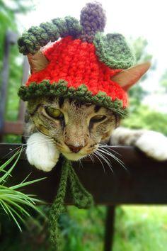 Pumpkin Cat Dog Hat - The Pumpkin Halloween Costume for Cats and Small Dogs - Pumpkin Cat Dog Costume