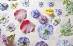 An expert on crystallising flowers shares the best edible flowers to use to create sweet treats