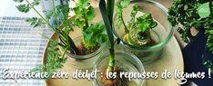 Je fais repousser mes légumes ! Beauty Case, Nature, Plants, Life, Replant, Push Away, Carrots, How To Make, Naturaleza