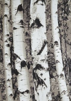 Looks like birch trees! This would be great for a cabin or lake house Beyond the Grove Shower Curtain, #ModCloth