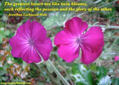 The greatest lovers are like twin blooms, each reflecting the passion and the glory of the other. - Jonathan Lockwood Huie