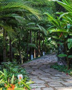 Tropical path by Alex Hanazaki Paisagismo - tropical garden ideas Tropical Backyard Landscaping, Tropical Garden Design, Front Yard Landscaping, Landscaping Ideas, Tropical Gardens, Walkway Ideas, Luxury Landscaping, Landscaping Software, Outdoor Landscaping