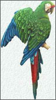"""Green Military Macaw Parrot Metal Wall Hanging. Tropical Decor - Recycled steel drum art - 10"""" x 24"""" - See more hand painted metal wall decor at www.TropicDecor.com"""