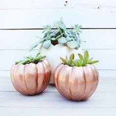 DIY: pumpkin planters!