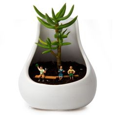Holly gift idea succulent vase