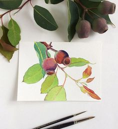 Original painting of Red Flowering Gum's branch with  gum nuts by Zoya Makarova Watercolour on paper 5x7 inches.  Australian native flora