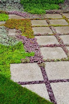 Sedum succulent plants between stone stepping stones, hardscape, gardening, landscaping, low water requirements