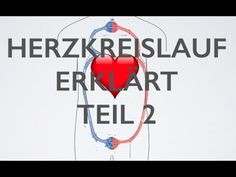 Herz Kreislauf Teil 2 | Medizin Grundlagen