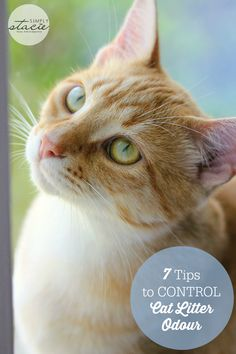7 Tips to Control Cat Litter Odour - simple ways you can keep your home smelling fresh and clean.