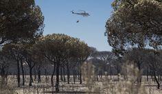 Una negligencia en una carbonería podría ser el origen del incendio del espacio natural de Doñana, dice el consejero andaluz de Medio Ambiente, José Fiscal.