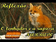 Reflexão O lenhador e a raposa Narrado - YouTube