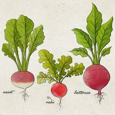 Fruixi by Mc Baldassari, via Behance