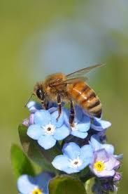 pinterest ozbarb - Google Search Bees And Wasps, Insects, Google Search, Animals, Animales, Animaux, Animal, Animais