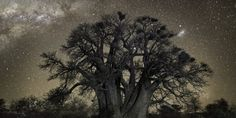 Beth Moon's Majestic Photographs Of Ancient Trees Will Make You Feel Very, Very Small