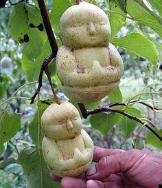 poire bouddha