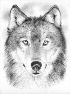 portrait wolf - Google zoeken