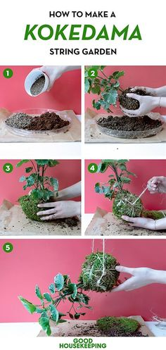 Gardening is a hobby that can have many uses: from health benefits of physical work in the garden to the possibility of growing your flowers and vegetables, to air purifying. However, there's another use for your garden plants, and it's home decor. That's right, plants can be used to add life to home interior and improve the atmosphere. All you need is your plants, some supplies, a little time and some imagination, and you can create decorations that will stun every guest. We hav...