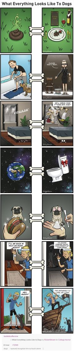 What everything looks like to dogs