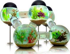 tällänen akvaario kiitos. :D