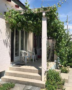"""By kleintiereonline.de. . Gartenbetrachtung aus verschiedenen Perspektiven: Veranda (Balkon) : An diesem Ort gibt es im Frühling (aber auch im Herbst) Gelegenheit die wärmende Sonne zu geniessen. Eine schnell wachsende Rebe sorgt im Hochsommer für Schatten und im Herbst mit weissen Tafeltrauben für eine Zwischenverpflegung. Von uns als """"Hochsitz"""" bezeichnet hat hier  jede und jeder den Blick auf den Garten vor sich. . #veranda #balkon #gartenbetrachtung #frühlingssonne #spästherbstsonne… Sidewalk, Plants, Types Of Perspective, Places, Summer, Pictures, Shadows, Balcony, Side Walkway"""