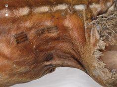 « Ötzi », l'homme des glaces découvert gelé dans les Alpes italo-autrichiennes arbore des tatouages thérapeutiques (petits traits parallèles le long des lombaires et sur les jambes). Les analyses au carbone 14 réalisées par la communauté scientifique estiment sa mort vers 3500 av. J.-C.