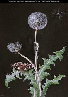 A Dandelion With A Butterfly And A Caterpillar - Barbara Regina Dietzsch