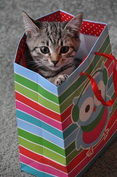 Kitten in a gift bag!