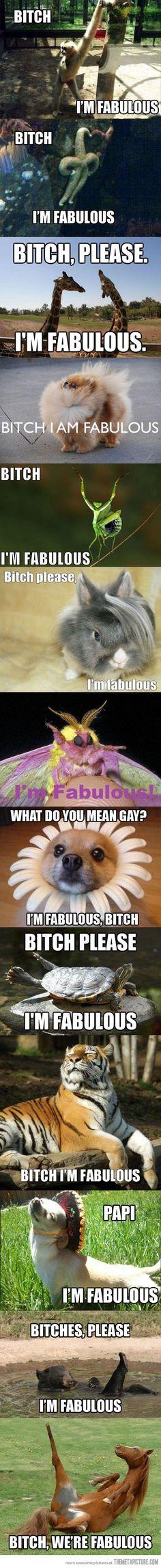 Beesh, I'm fabulous