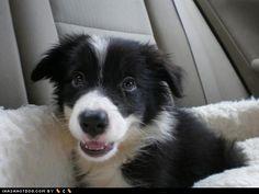 Cyoot Puppy ob teh Day: Blankey