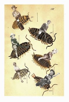 Lynn Skordal ~ Yippie-ki-yay (Woodlice) paper collage (Scientific Re-Illustration) set