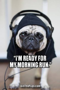 Since Join the Pugs bring the cuteness to Pug lovers all over the world. If you love Pugs. Amor Pug, Funny Animals, Cute Animals, Sweet Dogs, Pugs And Kisses, Pug Pictures, Cute Pugs, Funny Pugs, Pug Puppies