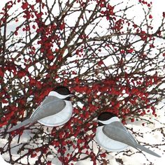 Chickadees in Winter. Set of six notecards and envelopes. $14.99 CDN. Free shipping within Canada and continental U.S.A.