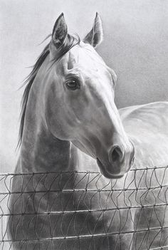 """Pencil horse drawing called """"Ranchers Foundation."""" by Mary Ross Buchholz.  A Limited Edition print."""