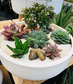 Ich ❤️ Sukkulenten Growing Succulents, Succulents In Containers, Cacti And Succulents, Planting Succulents, Planting Flowers, Outdoor Flower Planters, Outdoor Flowers, Succulent Display, Succulent Arrangements