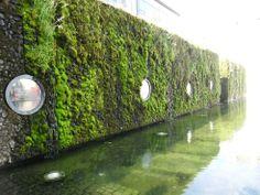 Dood mos wordt regelmatig gebruikt voor geluidsabsorberende panelen in kantoren. De structuur is ideaal voor absorptie van geluid met een hoge of midden frequentie. Dus waarom zouden we geen levende mossen laten groeien op geluidswallen?