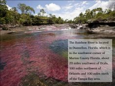 Amazing #Rainbow #River. Learn about rainbow river, View #amazing pics of #Florida #colorful river.