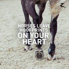 Yes they do! Love of Horses.
