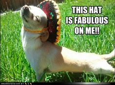 funny dog pictures - THIS HAT IS FABULOUS ON ME!!