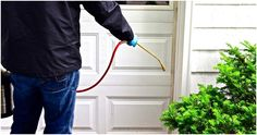 How To Find Best Pest Control Services In Bracknell Rat Pest Control, Termite Pest Control, Pest Control Services, Best Termite Treatment, Termite Inspection, Pest Management, Just For Fun, Health, Safety