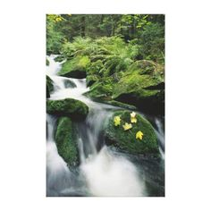 Bayerischer Wald National Park, Germany. 2 Canvas Print by National Geographic