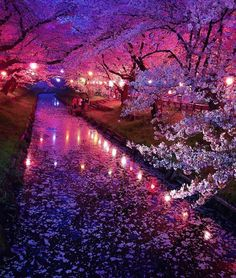 Cherry blossoms in Japan ✨🌸🌸🌸✨ Picture by ✨✨ . for a feature 💖 - wonderful_places