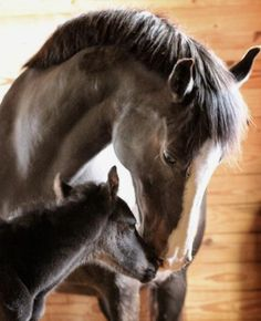 Sweet little foal and mare. So touching!