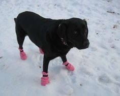make dog boots.    (look at that dogs face, poor thing is not thrilled)