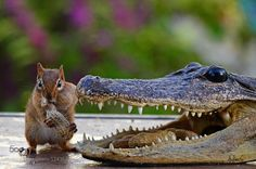 Alvin and Ollie Gator - 3 by andreae #animals #pets #fadighanemmd